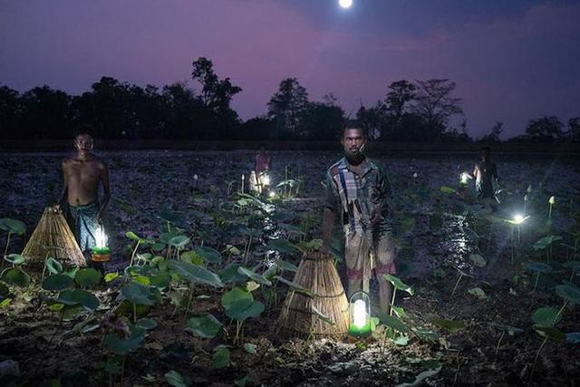 """Ảnh """"Người dân bẫy cá bằng năng lượng mặt trời ở Ấn Độ"""" đạt giải ấn tượng trong cuộc thi Nhiếp ảnh gia vì môi trường năm 2016. (Ảnh: Ruben Salgado Escudero)"""