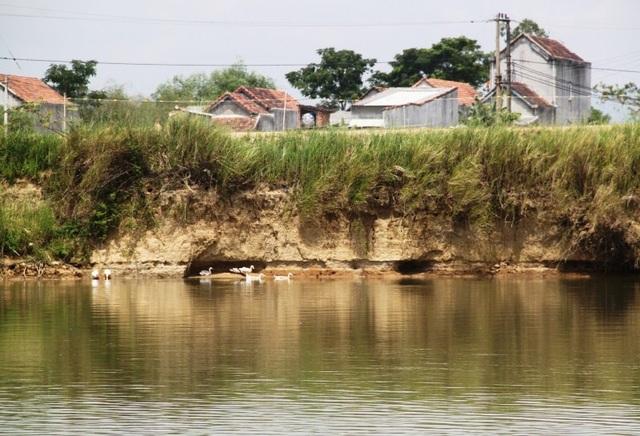 Phía bờ tả sông Kôn cũng bị sạt lở nghiêm trọng.
