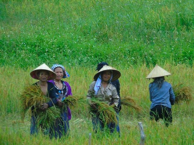 Đồng bào tại bản Ka Ai đang rộn ràng vào vụ gặt