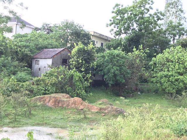 Vùng đất gia đình anh Phúc đang ở trước đó là bãi tha ma, còn phía dưới Đồng Hồ là vùng hoang hóa, hàng năm đều bị ngập úng không sản xuất được.