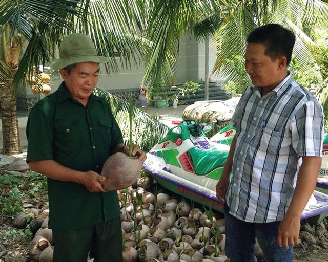 Ông Thắng còn có thêm thu nhập từ việc bán dừa giống. (Ảnh: NQ).
