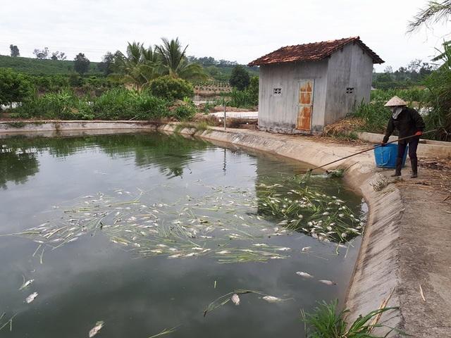 Cá chết hàng loạt khiến nông dân rơi vào cảnh điêu đứng vì mất vốn