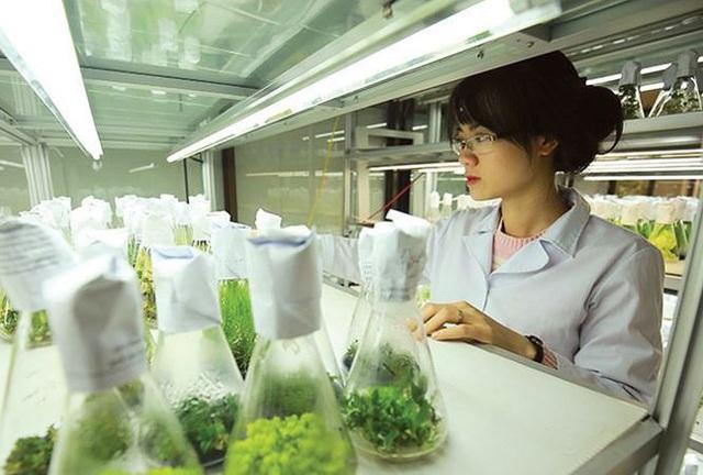 Cán bộ nghiên cứu tại Phòng thí nghiệm trọng điểm công nghệ gene, Viện Công nghệ Sinh học, Viện Hàn lâm Khoa học và Công nghệ Việt Nam. Ảnh: Loan Lê.