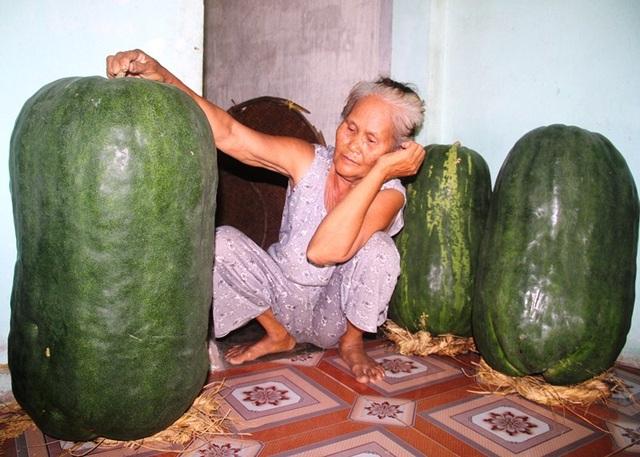 Theo bà Nguyễn Thị Đảm (68 tuổi, thôn Chánh Trạch 1), giống bí đao này chỉ khi trồng trên đất Bàu Chánh Trạch thì mới cho ra quả to như vậy. Đưa hạt giống đến ươm trồng ở nơi khác thì quả nhỏ chứ không to. Nhiều người về đây thấy bí to quá xin hạt giống về gieo thử nhưng cho quả như bí bình thường.