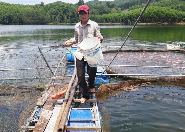 Theo anh Bảo, hiện tại đang tính toán mở rộng lồng nuôi thêm cá điêu hồng vì cá nuôi của anh không đủ để cung cấp ra thị trường.
