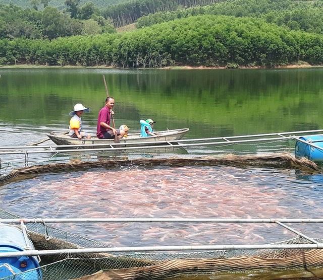 Dưới hồ là lồng cá điêu hồng, trên núi là trên 3ha keo lai cho thu nhập luân phiên hàng năm vài chục triệu đồng.