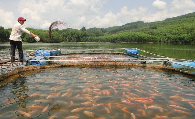 Chàng thanh niên Trần Công Bảo có cuộc sống khá giả hơn nhờ biết tận dụng mặt nước hồ để nuôi cá điêu hồng.