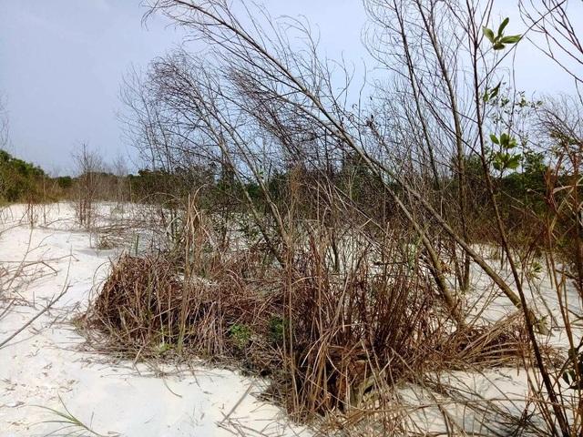 Cát thải cao lanh tràn ra đến đâu là cây cối chết đến đó
