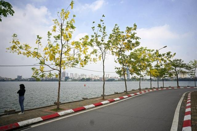 Dãy cây muồng hoàng yến đang nở hoa trên con đường ven hồ Tây, Hà Nội.