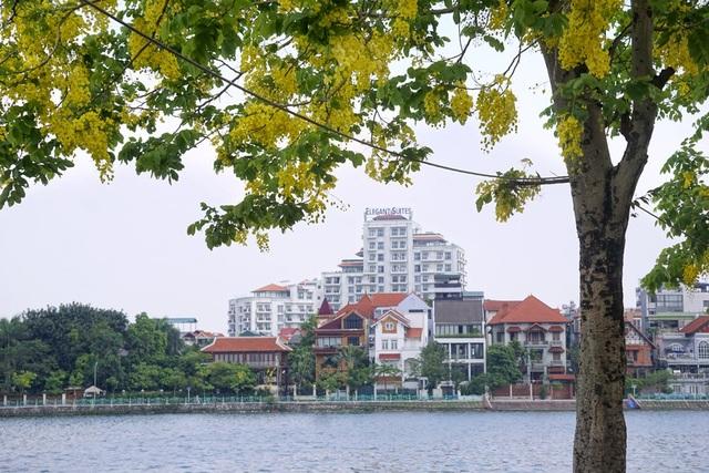 Hoa muồng hoàng yến nhuộm vàng con đường ven hồ Hà Nội - 10