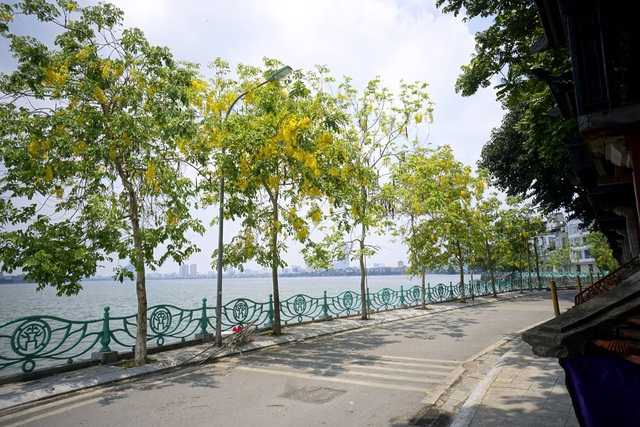 Hoa muồng hoàng yến nhuộm vàng con đường ven hồ Hà Nội - 16