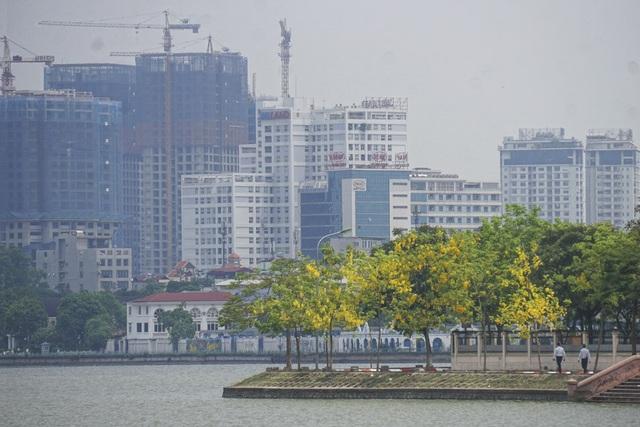Ở Việt Nam, muồng (có nơi gọi là cây bọ cạp nước) mọc hoang dại trong rừng thưa ở các tỉnh Tây Nguyên như Gia Lai, Kon Tum, Đắk Lắk, Đắk Nông. Cây cũng còn được trồng nhiều ở đô thị như Nha Trang, Đà Lạt, Đà Nẵng, Sài Gòn...