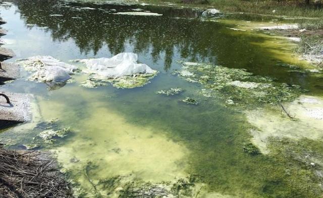 Để đối phó, phía chủ hồ tôm cho rải một ít vôi bột vào dòng mương nước như thế này