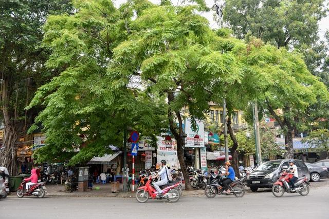 Những cây trong danh sách chặt hạ hoặc đánh chuyển đều được đánh số, có hồ sơ riêng về chủng loại, chiều cao...