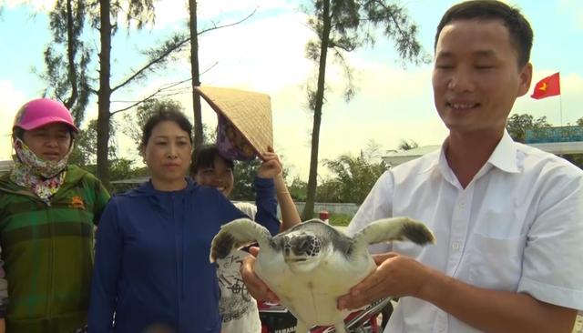 Con rùa biển nặng khoảng 4kg lần đầu tiên ngư dân Cửa Hội bắt được.