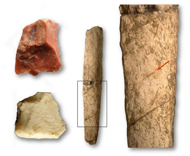Các công cụ bằng đá (bên trái) đã tạo ra các vết róc thịt (hình mũi tên) trên một khúc xương hà mã (hình giữa và hình cận cảnh bên phải) khoảng 709.000 năm trước ở quần đảo Philippines - Ảnh từ T. Ingicco.