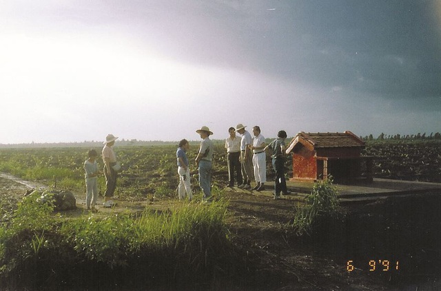 Những cánh đồng rau trong ngày doanh nghiệp đến khảo sát
