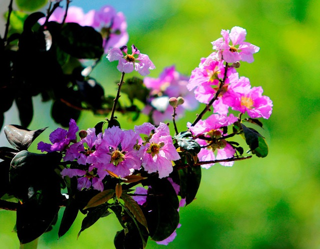 Một ngày tháng 5, xuống phố tràn ngập sắc màu của những loài hoa, bỗng thấy Hà Nội rực rỡ, đáng yêu vô cùng.