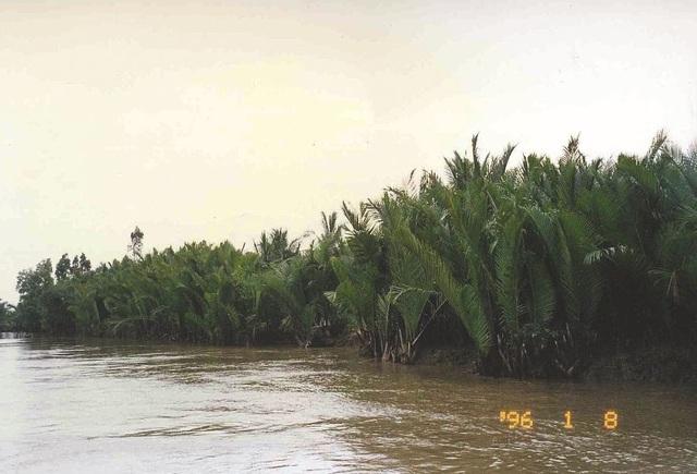 Cả một vùng sông nước kênh rạch chằng chịt dừa nước