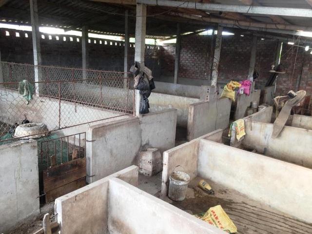 Nhiều chuồng trại đang phải bỏ hoang vì người chăn nuôi thua lỗ quá nặng, lâm vào cảnh nợ nần, không thể tái đàn.