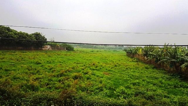 Nhiều hộ dân còn bỏ ruộng hoang hoá để kinh doanh nuôi lợn, khiến diện tích đất nông nghiệp hoang hoá tai Ngọc Lũ khá nhiều