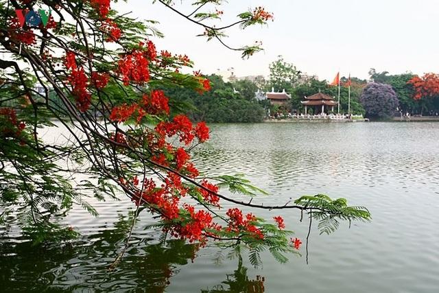 Hoa phượng thắp lửa bên Hồ Gươm - 2