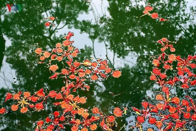 Hoa rụng xuống nước rồi mà vẫn như còn đang thắp lửa.