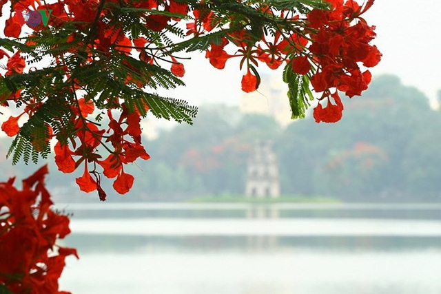 Hoa phượng thắp lửa bên Hồ Gươm - 10