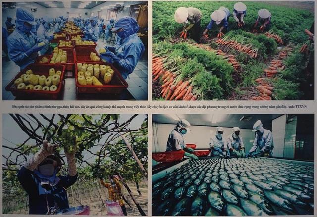 Bên cạnh những sản phẩm gạo, thủy hải sản, cây ăn quả cũng là một thế mạnh trong việc thúc đẩy chuyển dịch cơ cấu kinh tế, được các địa phương chú trọng trong thời gian gần đây. (Ảnh: TTXVN).