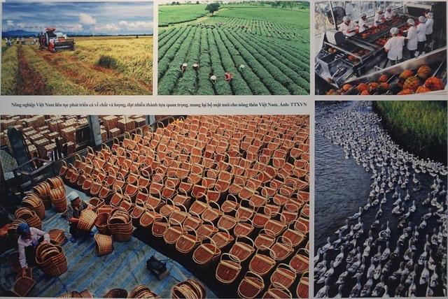 Nông nghiệp Việt Nam liên tục phát triển cả về chất và lượng, đạt nhiều thành tựu quan trọng, mang lại bộ mặt mới cho nông thôn Việt Nam. (Ảnh: TTXVN).