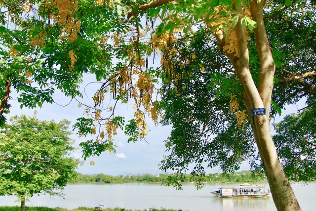 Vào những ngày này, khách du lịch khi đến Huế sẽ được chiêm ngưỡng loài hoa muồng hoàng yến nở thành những dải dài bên cạnh dòng Hương khiến cho con sông này càng trở nên trữ tình, thơ mộng.
