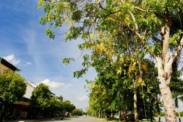 Loài hoa này thường nở vào khoảng tháng 5 đến tháng 7, được trồng như một loại cây cảnh, tạo thêm điểm nhấn cho thành phố Huế mỗi độ hè về.