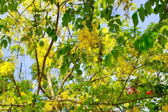 Màu hoa vàng dễ chịu