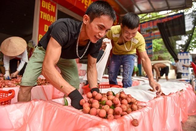 Nông dân Bắc Giang tất bật vào vụ thu hoạch vải - 8