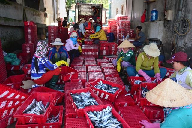 Sau một đêm ra khơi, tàu cá của ngư dân Quảng Ngãi có thể kiếm được hàng chục triệu đồng