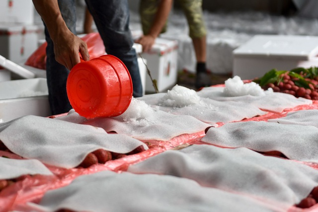 Đá được rải lên trên mặt thùng xốp trước khi đóng nắp.