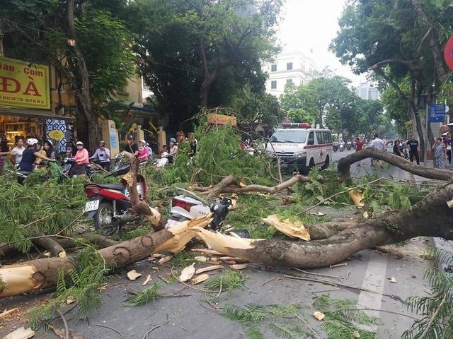 Phần thân cây Phượng cổ thụ bị gẫy làm nhiều mảnh trên phố Quán Sứ.