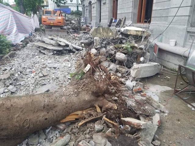 Hà Nội: Cây cổ thụ bật rễ, đè trúng 5 người trên phố Quán Sứ - 6