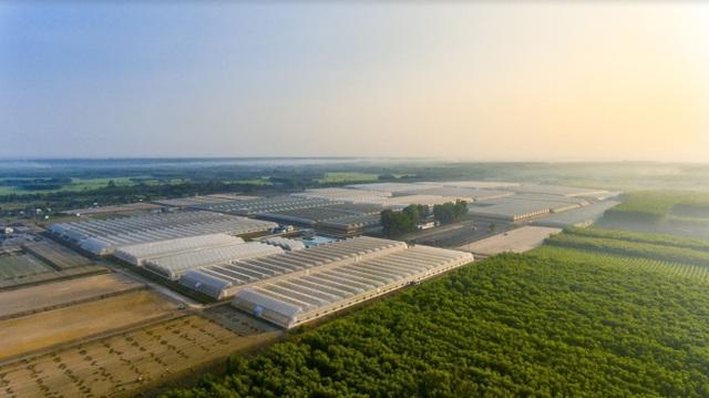 Công ty VinEco đang vận hành 15 nông trường công nghệ cao quy mô lớn trên cả nước.
