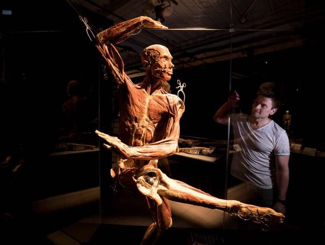Ảnh chụp bên trong triển lãm Body World Vitals