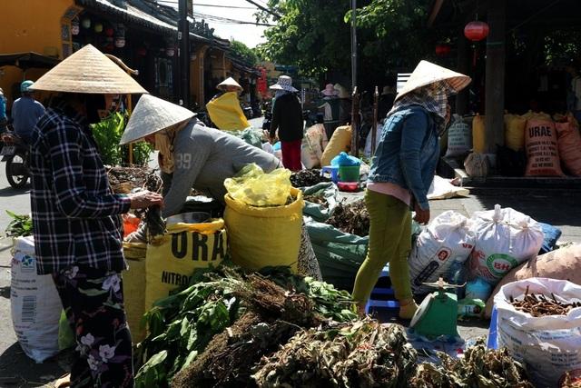 """Lá mùng 5, loại lá ưa chuộng của người dân Quảng Nam trong ngày tết Đoan Ngọ cũng tấp nập """"xuống phố"""""""