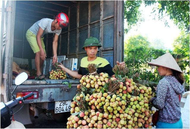 Dù được mùa nhưng giá vải thiều Bắc Giang vẫn được đánh giá đang ở mức tương đối cao.