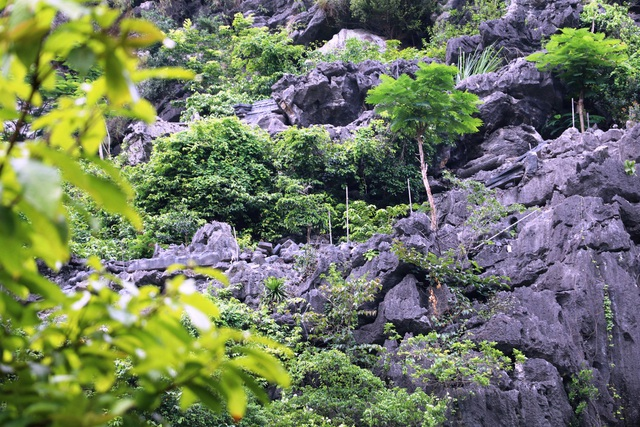 Nhiều đoạn tháo dỡ xong Công ty CP Du lịch Tràng An đã trồng cây xanh phủ kín.