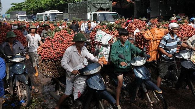 Người nông dân trồng vải ở Bắc Giang phấn khởi vì vải thiều năm nay được mùa được giá