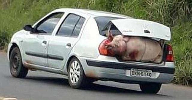 Cố gắng nhồi nhét vào phía sau cốp xe
