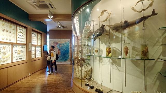 Bộ sưu tập các mẫu vật hóa thạch tại bảo tàng Thiên nhiên Việt Nam thể hiện qua 4 thời kỳ: Tiền Cambri (4.500 - 542 triệu năm trước), Đại cổ sinh (541-252 triệu năm trước), Đại trung sinh (252-66 triệu năm trước) và Đại tân sinh (66 triệu năm trước cho đến nay).