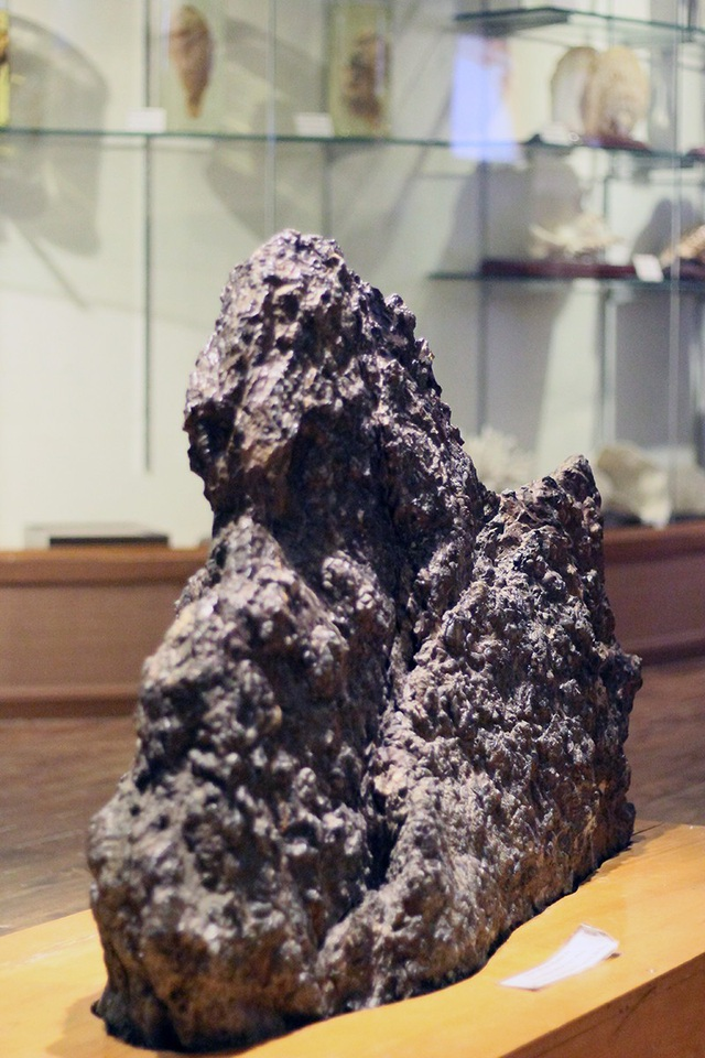 Quần thể san hô bốn tia (nipponophyllum nikolaevae) thu tại núi Xuân Sơn, An Lão, Hải Phòng.