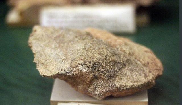 Mẫu xương đùi khủng long thuộc kỷ Creta sớm, thu tại Savanakhet, Lào.