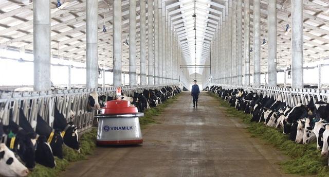 Tổ hợp trang trại công nghệ cao Thống Nhất tại Thanh Hóa – vừa khánh thành vào tháng 3/2018 sẽ là nơi chăm sóc và nuôi dưỡng những cô bò A2 thuần chủng