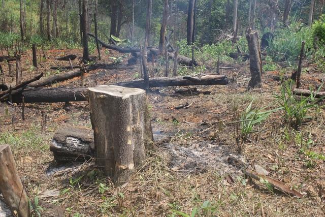 Đủ mọi hình thức thì những cây rừng đang bị xâm hại